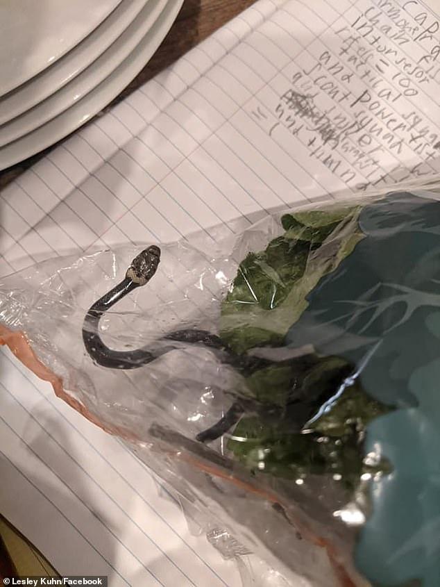 الثعبان عُثِر عليه في كيس من الخس