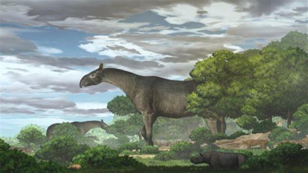 صورة عمره 26 مليون سنة .. شاهد أضخم مخلوق بالتاريخ في الصين صور