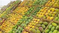 صورة ارتفاع المانجو والبرتقال.. أسعار الخضراوات والفاكهة اليوم الأربعاء 4-8-2021